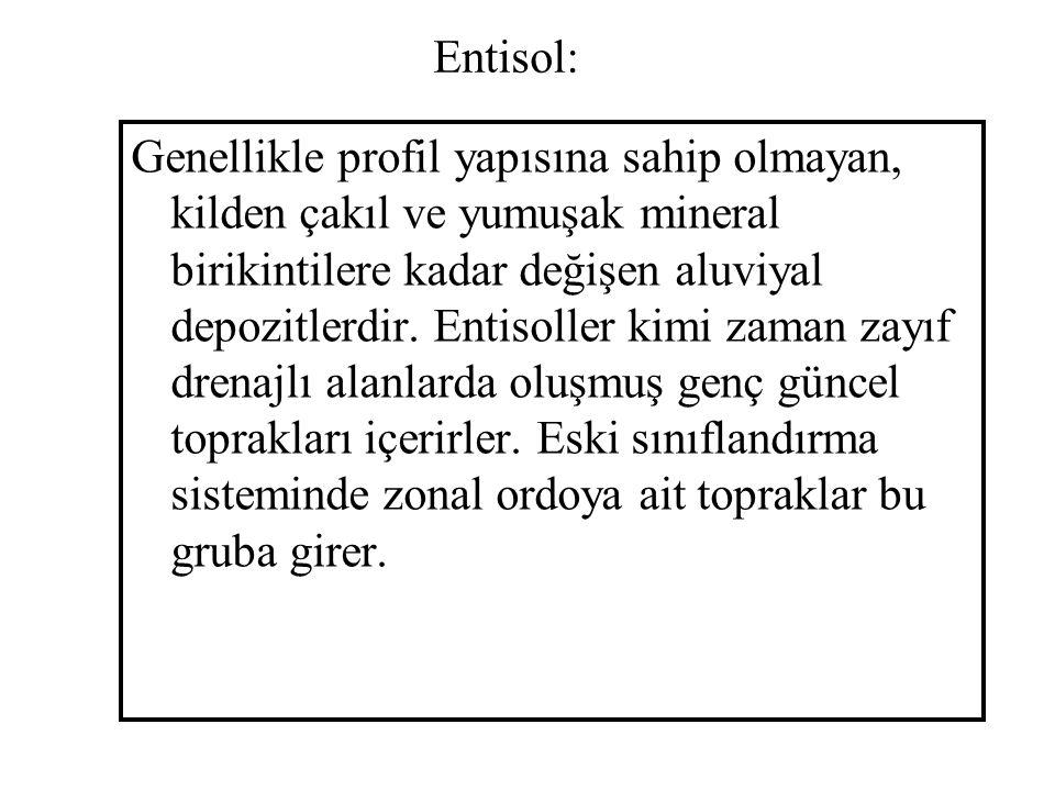 Entisol: