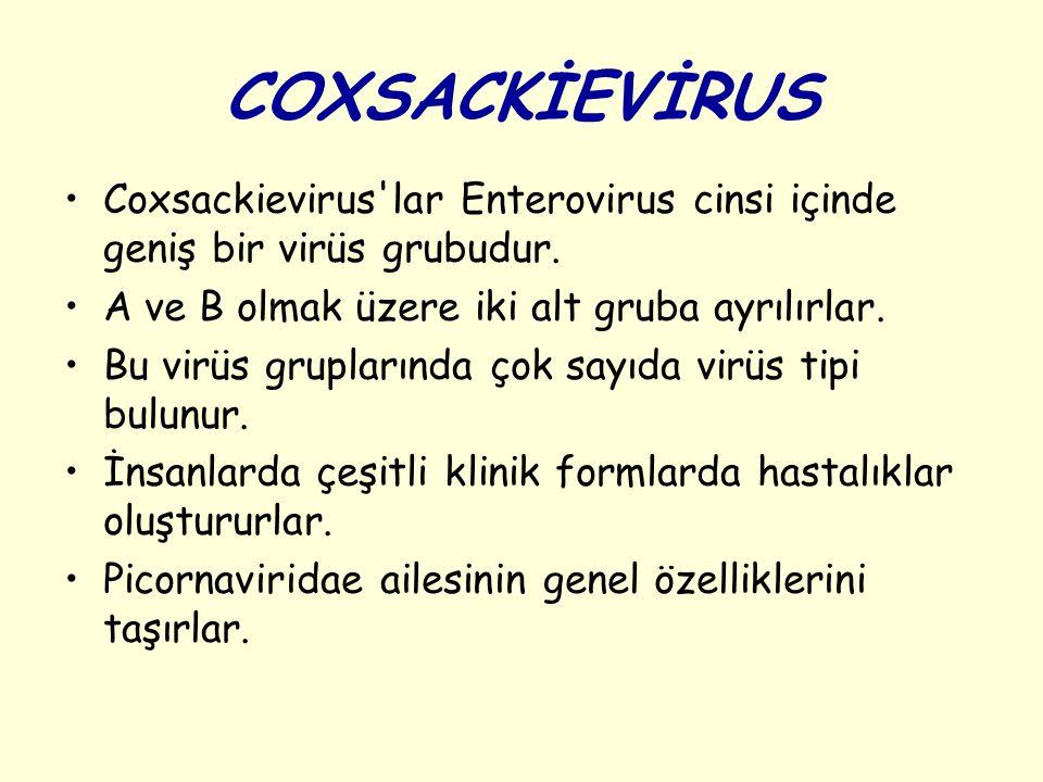 COXSACKİEVİRUS Coxsackievirus lar Enterovirus cinsi içinde geniş bir virüs grubudur. A ve B olmak üzere iki alt gruba ayrılırlar.