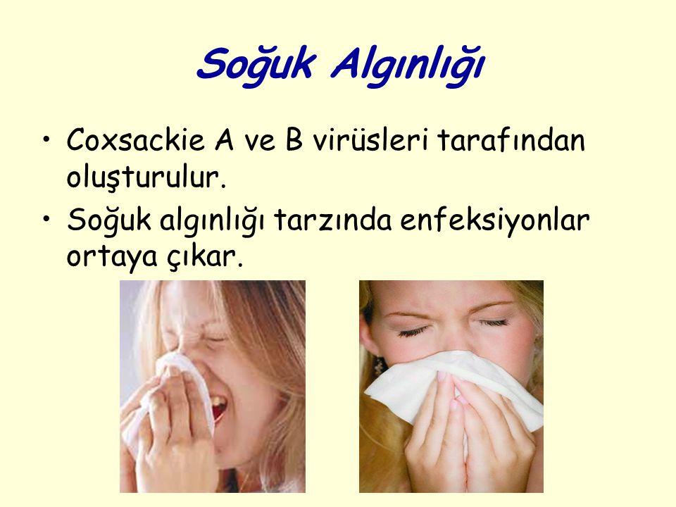 Soğuk Algınlığı Coxsackie A ve B virüsleri tarafından oluşturulur.
