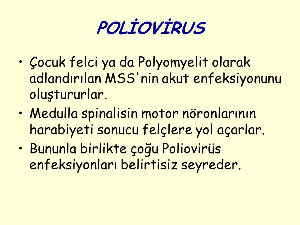 POLİOVİRUS Çocuk felci ya da Polyomyelit olarak adlandırılan MSS nin akut enfeksiyonunu oluştururlar.