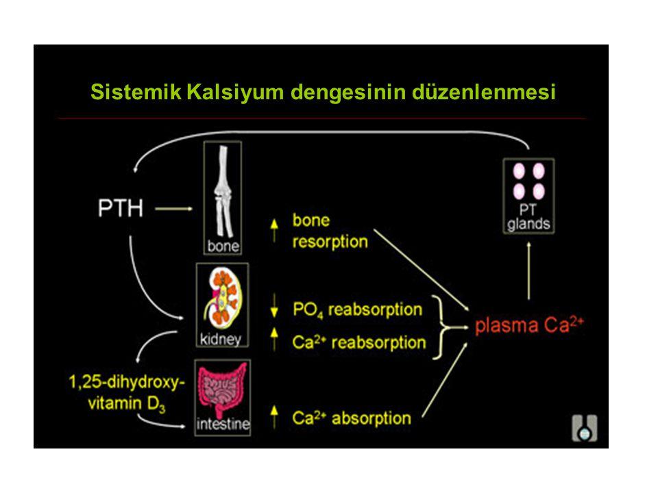 Sistemik Kalsiyum dengesinin düzenlenmesi