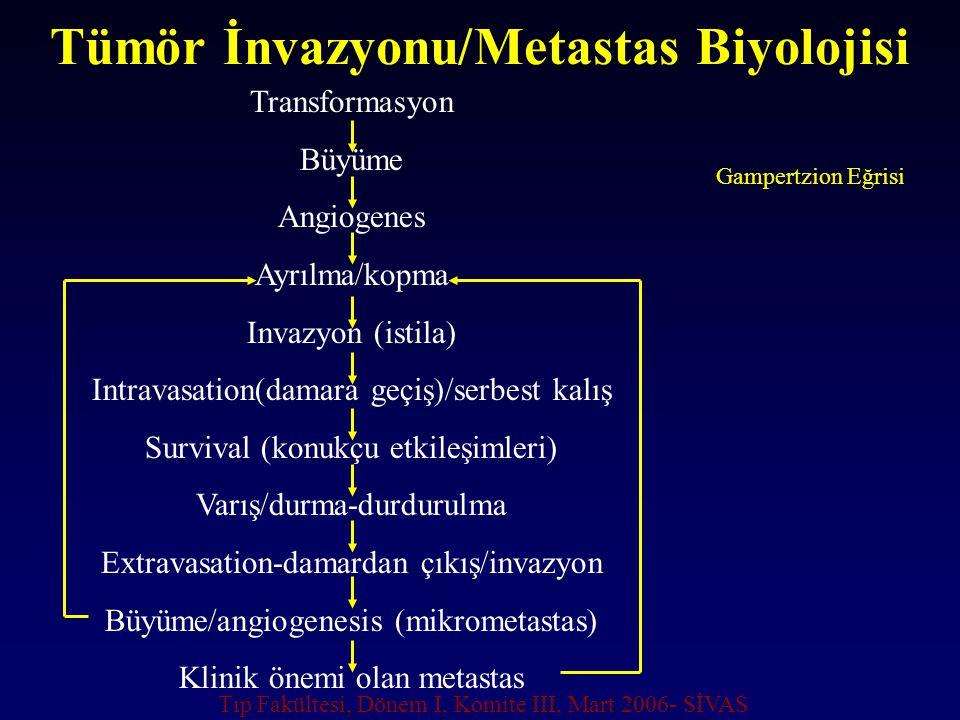 Tümör İnvazyonu/Metastas Biyolojisi