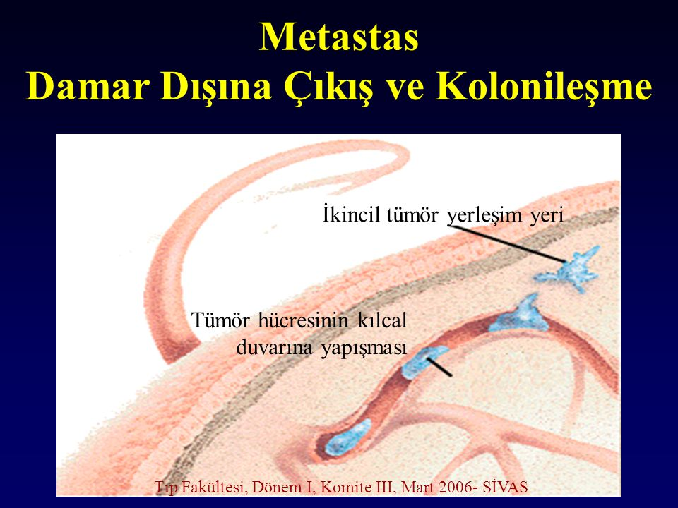 Metastas Damar Dışına Çıkış ve Kolonileşme