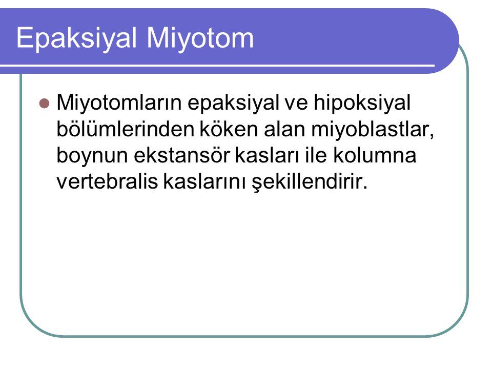Epaksiyal Miyotom