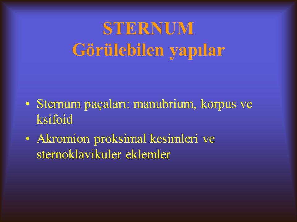 STERNUM Görülebilen yapılar