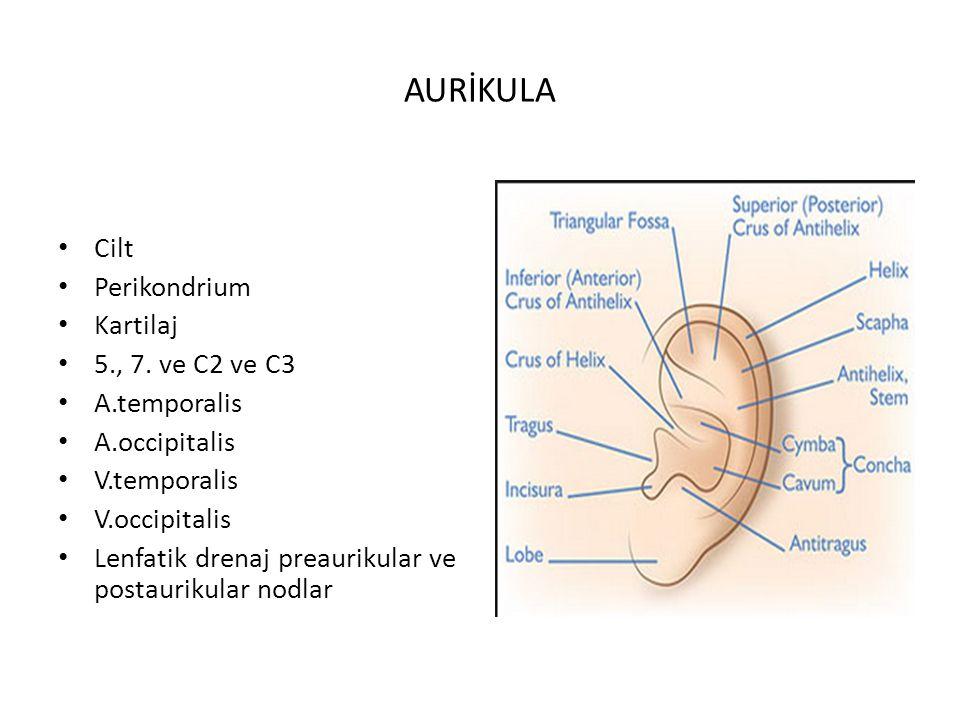 AURİKULA Cilt Perikondrium Kartilaj 5., 7. ve C2 ve C3 A.temporalis