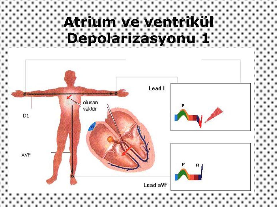 Atrium ve ventrikül Depolarizasyonu 1