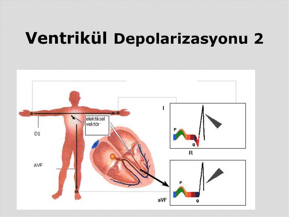 Ventrikül Depolarizasyonu 2
