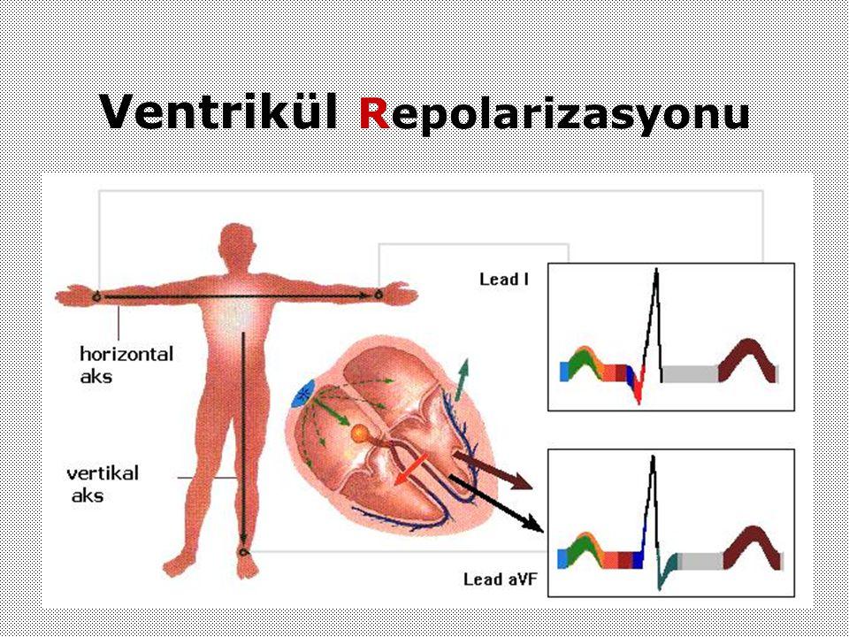 Ventrikül Repolarizasyonu