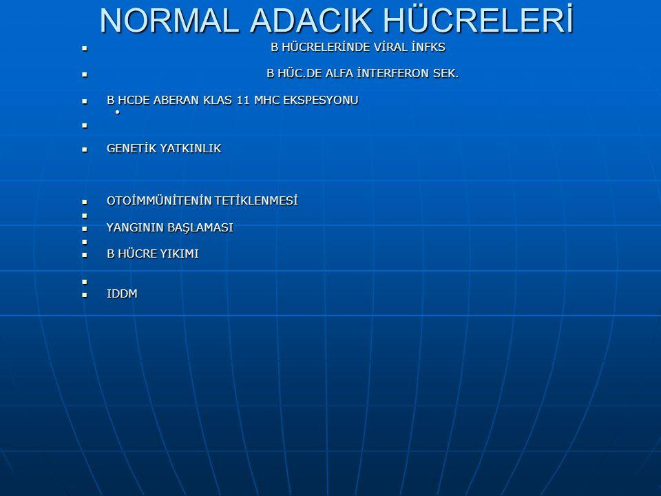 NORMAL ADACIK HÜCRELERİ