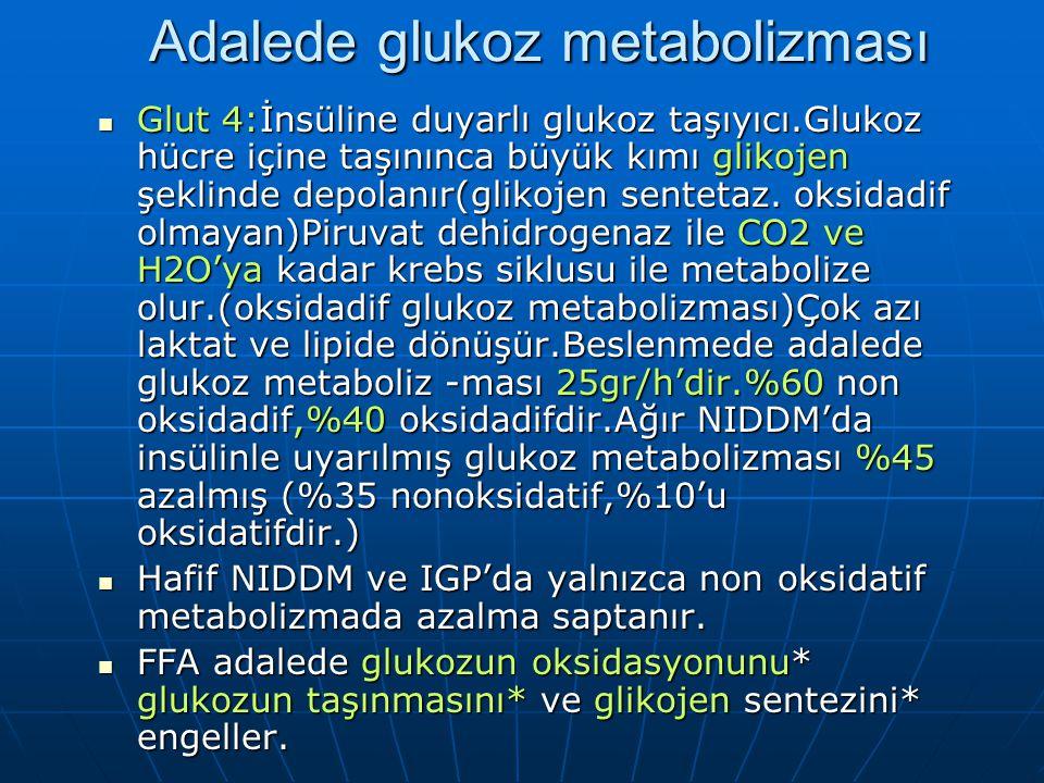 Adalede glukoz metabolizması