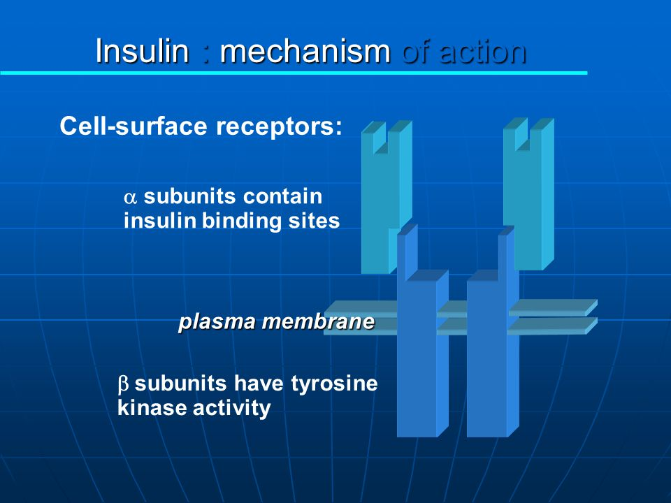 Insulin : mechanism of action
