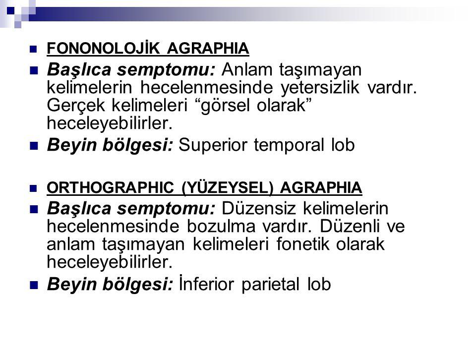 Beyin bölgesi: Superior temporal lob