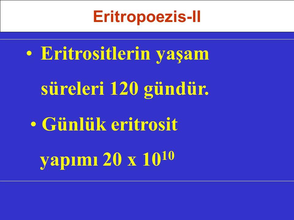 Eritrositlerin yaşam süreleri 120 gündür.