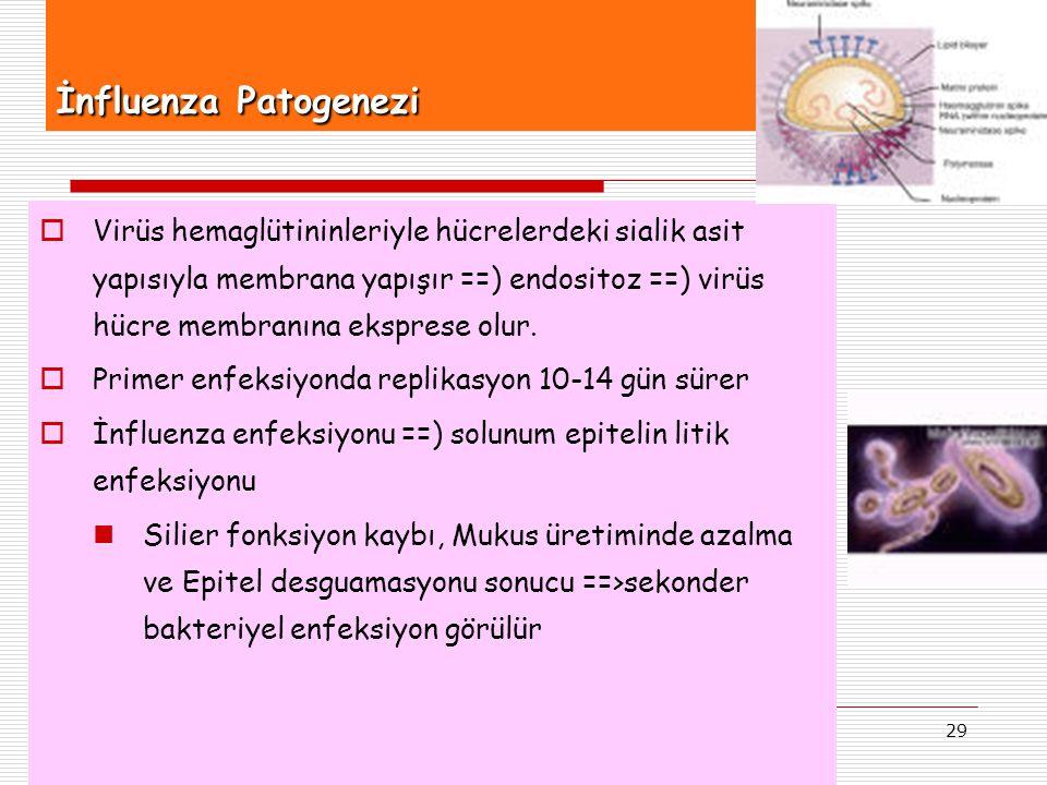 İnfluenza Patogenezi