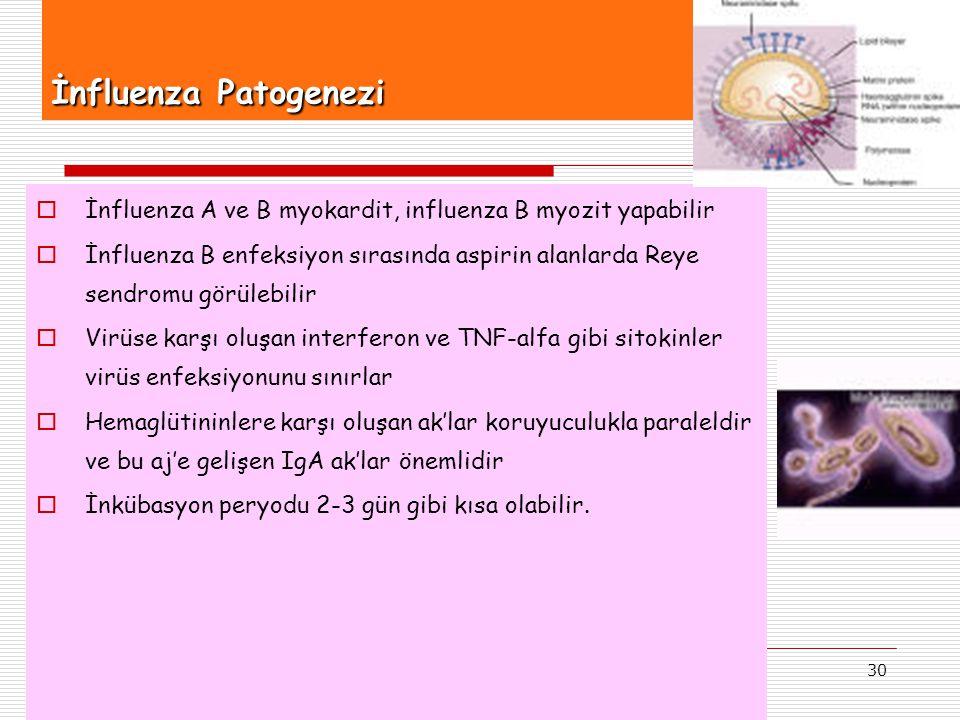 İnfluenza Patogenezi İnfluenza A ve B myokardit, influenza B myozit yapabilir.