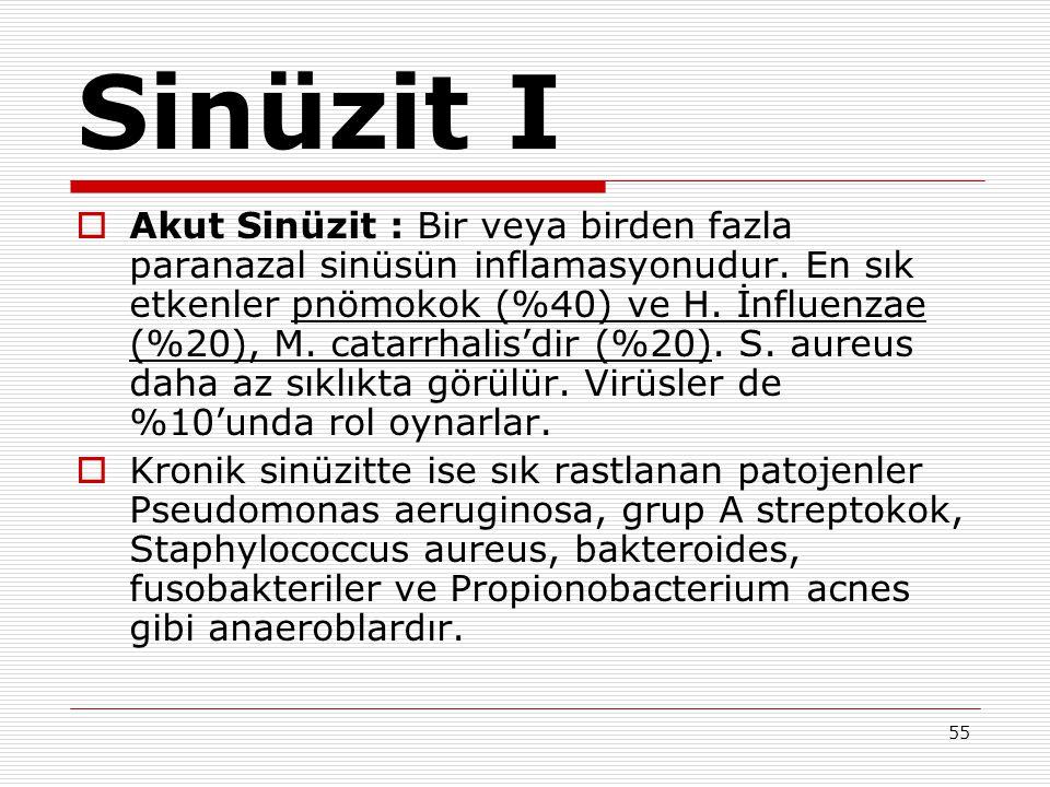 Sinüzit I