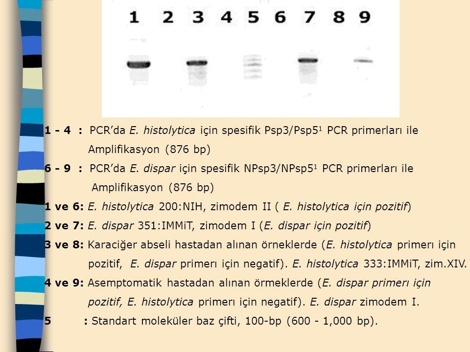 1 - 4 : PCR'da E. histolytica için spesifik Psp3/Psp51 PCR primerları ile