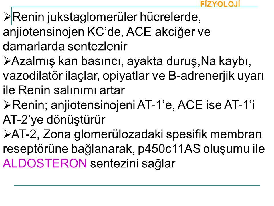 Renin; anjiotensinojeni AT-1'e, ACE ise AT-1'i AT-2'ye dönüştürür