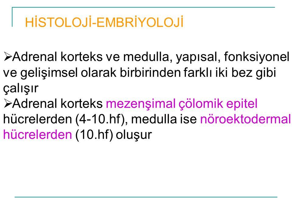 HİSTOLOJİ-EMBRİYOLOJİ