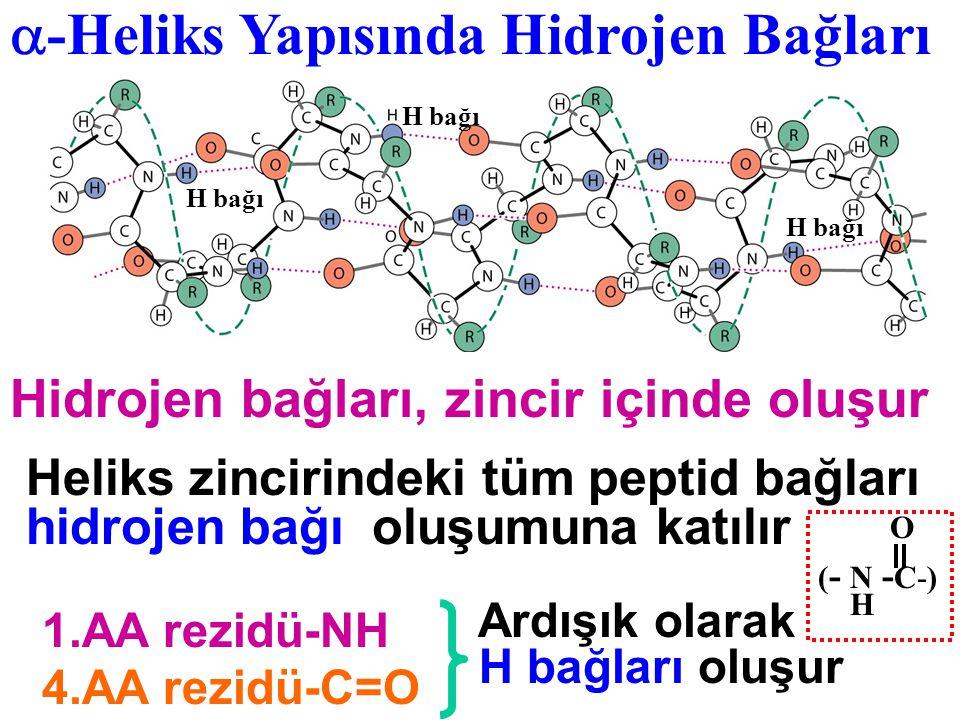 -Heliks Yapısında Hidrojen Bağları
