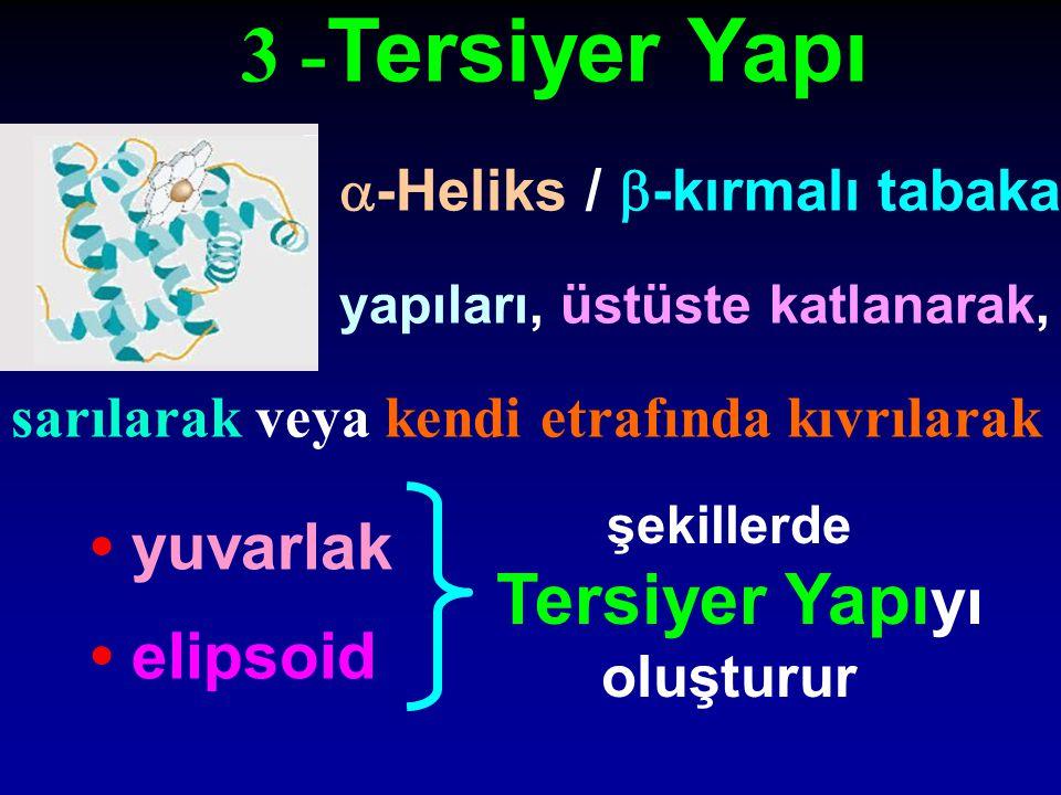 3 -Tersiyer Yapı Tersiyer Yapıyı • yuvarlak • elipsoid