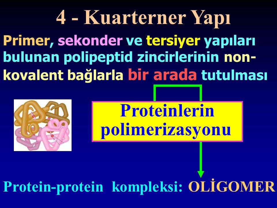 4 - Kuarterner Yapı Proteinlerin polimerizasyonu