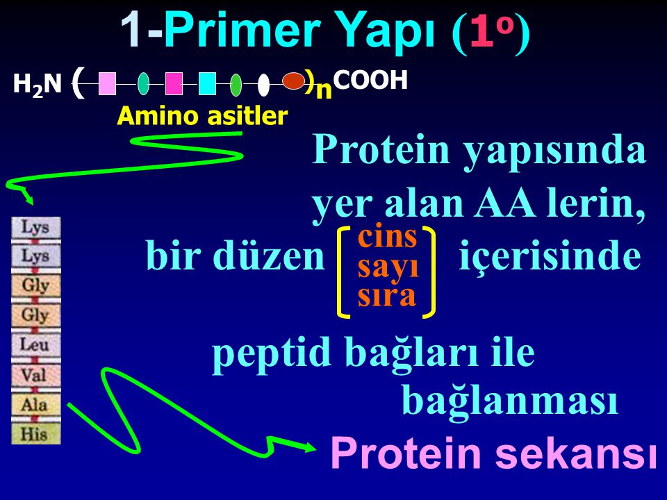 1-Primer Yapı (1o) Protein yapısında yer alan AA lerin,