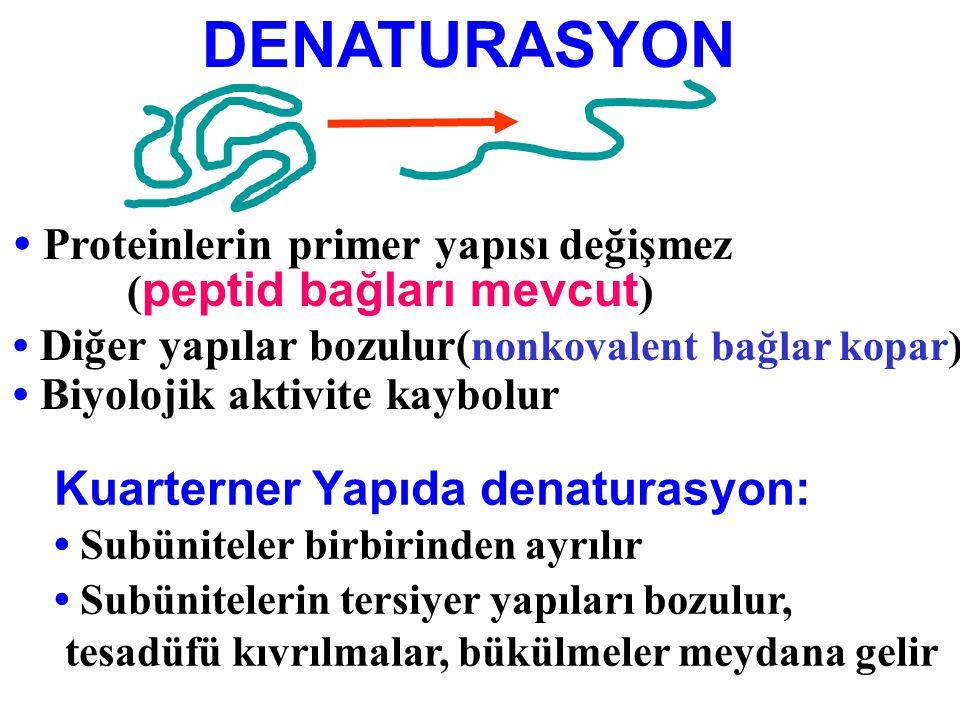 DENATURASYON • Proteinlerin primer yapısı değişmez