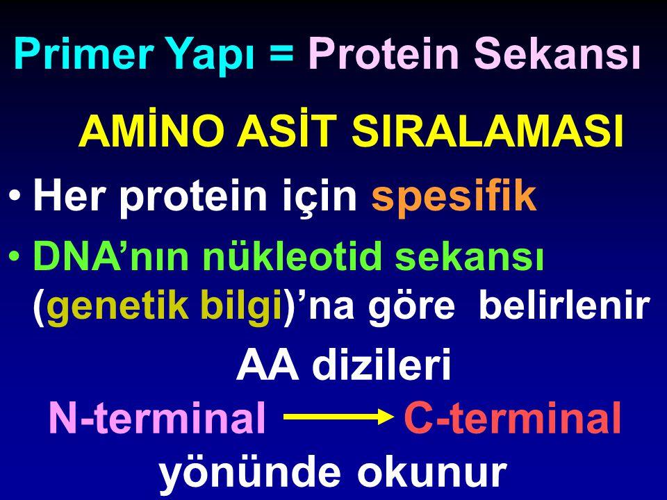 Primer Yapı = Protein Sekansı