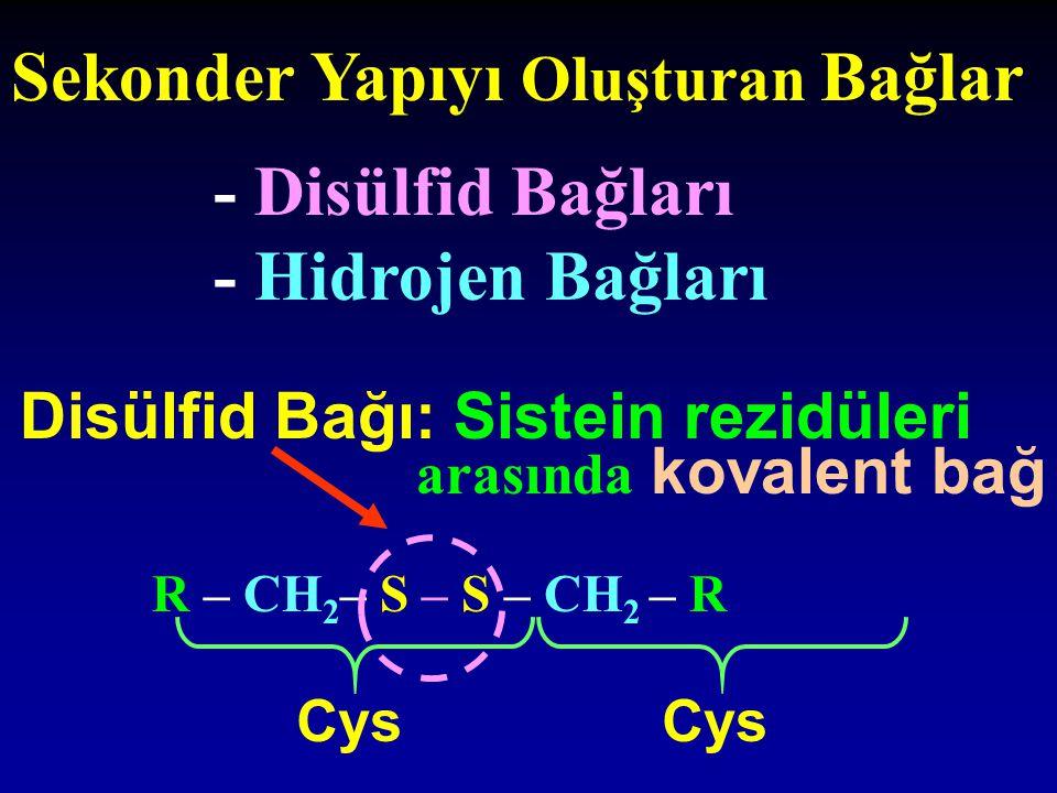 Sekonder Yapıyı Oluşturan Bağlar - Disülfid Bağları - Hidrojen Bağları