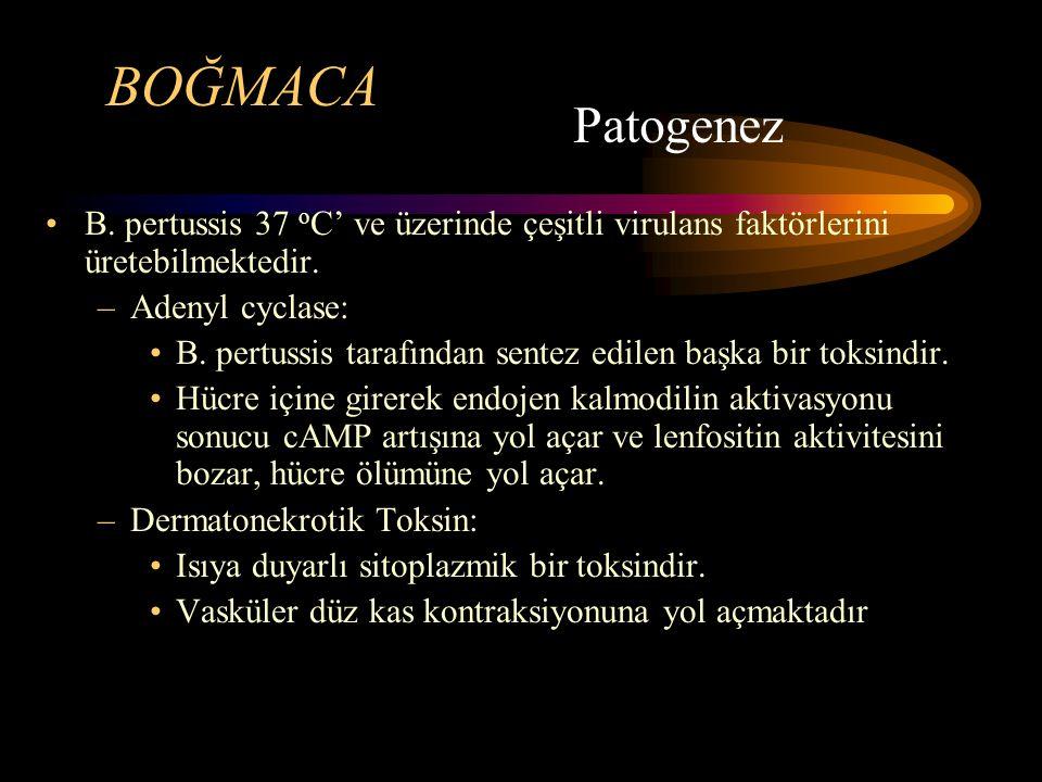 BOĞMACA Patogenez. B. pertussis 37 oC' ve üzerinde çeşitli virulans faktörlerini üretebilmektedir.