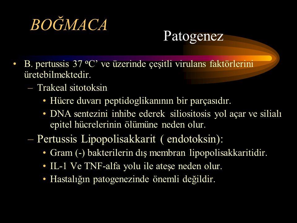 BOĞMACA Patogenez Pertussis Lipopolisakkarit ( endotoksin):