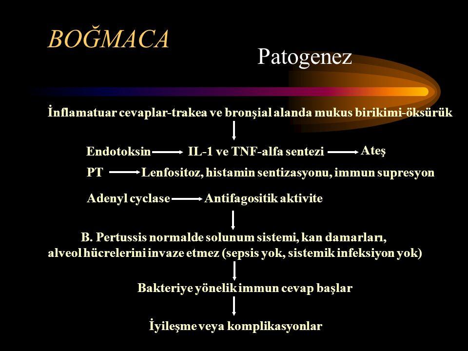 BOĞMACA Patogenez. İnflamatuar cevaplar-trakea ve bronşial alanda mukus birikimi-öksürük. Endotoksin.
