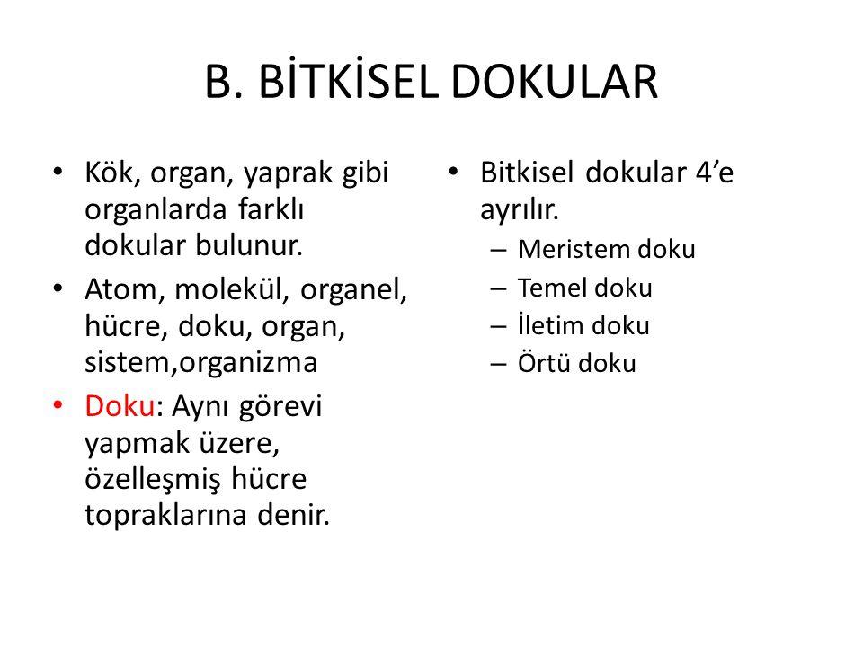 B. BİTKİSEL DOKULAR Kök, organ, yaprak gibi organlarda farklı dokular bulunur. Atom, molekül, organel, hücre, doku, organ, sistem,organizma.