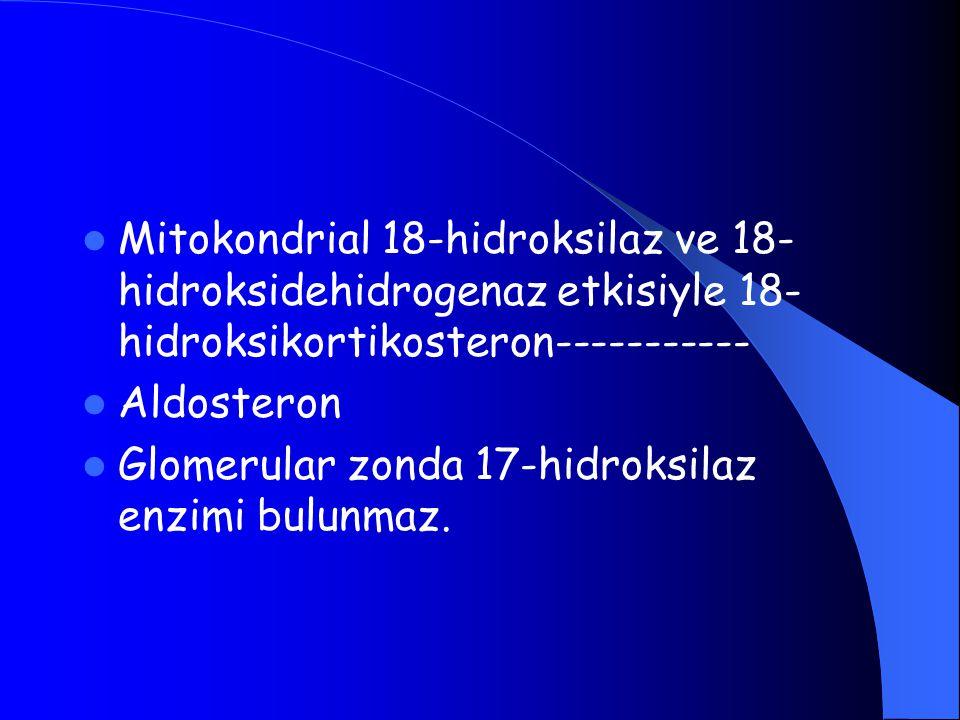 Mitokondrial 18-hidroksilaz ve 18-hidroksidehidrogenaz etkisiyle 18-hidroksikortikosteron-----------