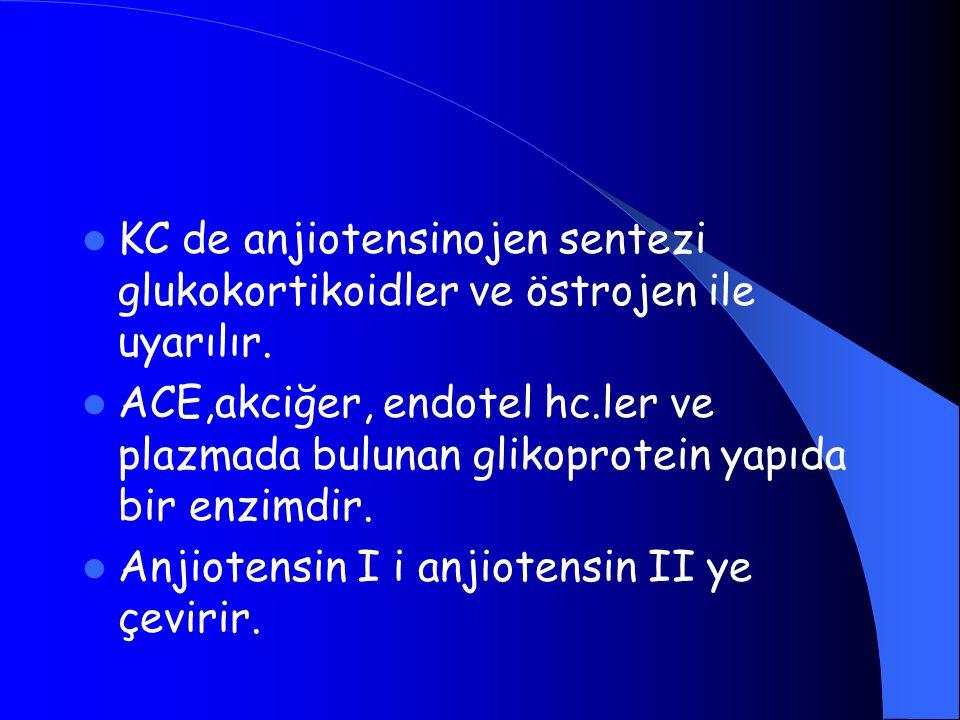 KC de anjiotensinojen sentezi glukokortikoidler ve östrojen ile uyarılır.