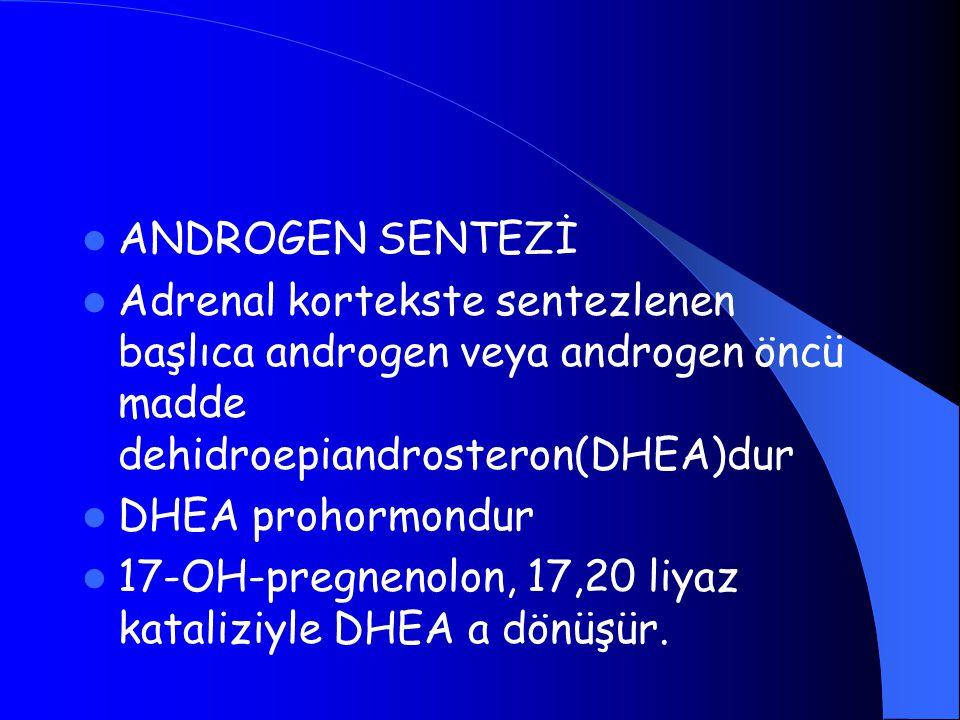ANDROGEN SENTEZİ Adrenal kortekste sentezlenen başlıca androgen veya androgen öncü madde dehidroepiandrosteron(DHEA)dur.