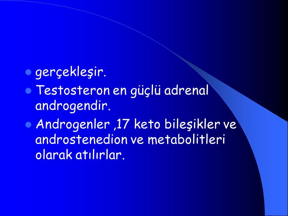 gerçekleşir. Testosteron en güçlü adrenal androgendir.