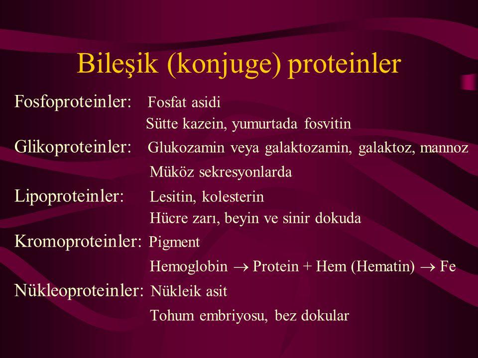 Bileşik (konjuge) proteinler