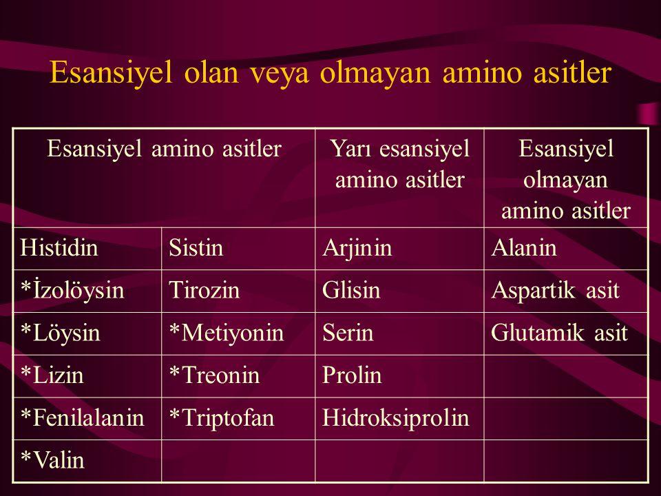 Esansiyel olan veya olmayan amino asitler