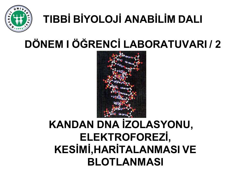 TIBBİ BİYOLOJİ ANABİLİM DALI DÖNEM I ÖĞRENCİ LABORATUVARI / 2