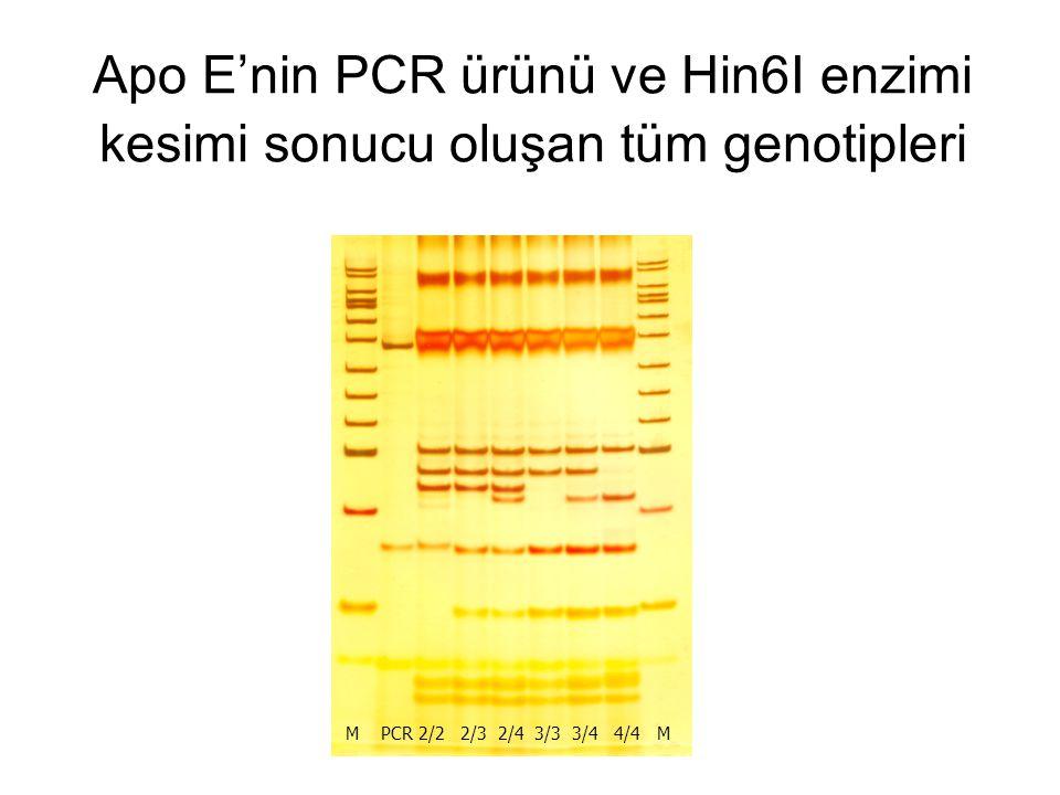 Apo E'nin PCR ürünü ve Hin6I enzimi kesimi sonucu oluşan tüm genotipleri