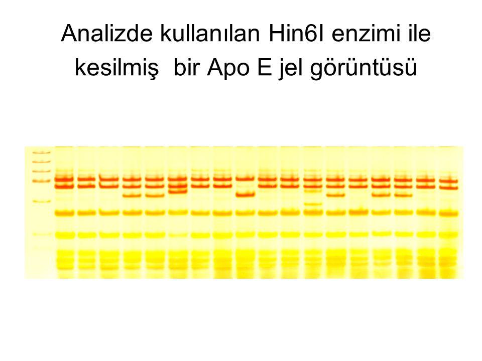 Analizde kullanılan Hin6I enzimi ile kesilmiş bir Apo E jel görüntüsü