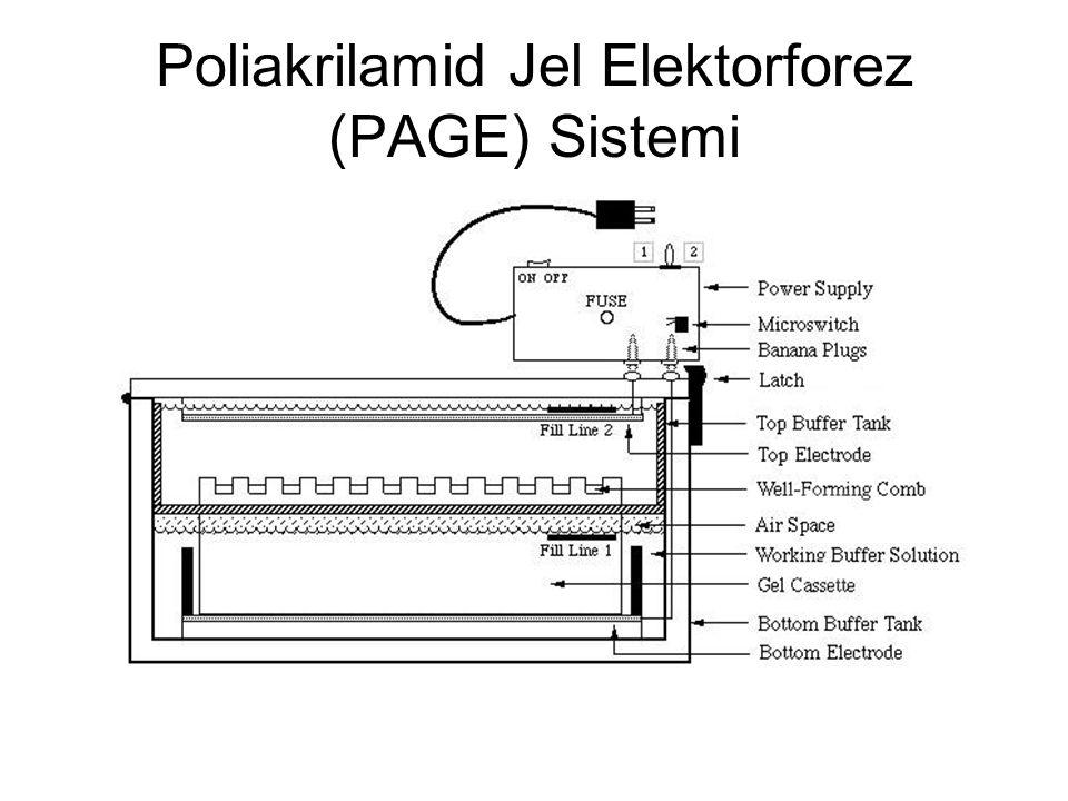 Poliakrilamid Jel Elektorforez (PAGE) Sistemi