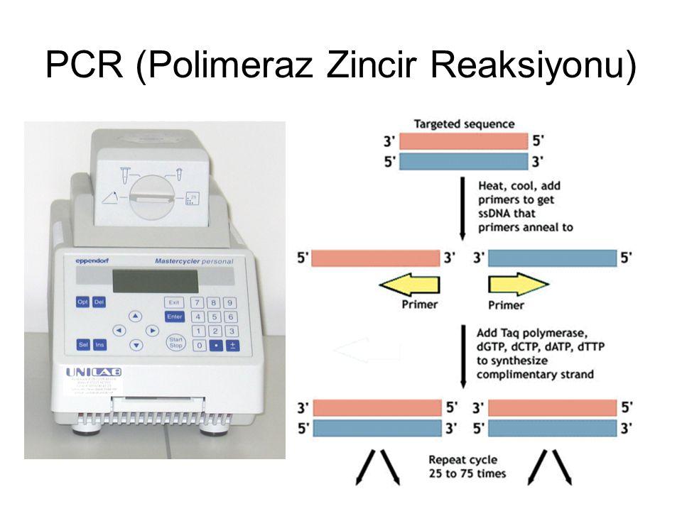 PCR (Polimeraz Zincir Reaksiyonu)