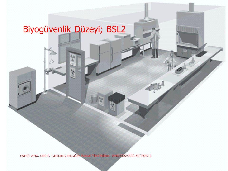 Biyogüvenlik Düzeyi; BSL2