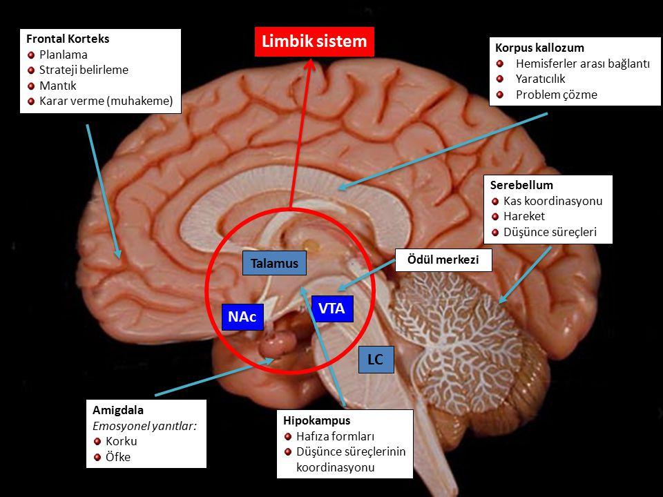 Limbik sistem Limbik sistem VTA NAc VTA NAc LC LC Talamus Talamus