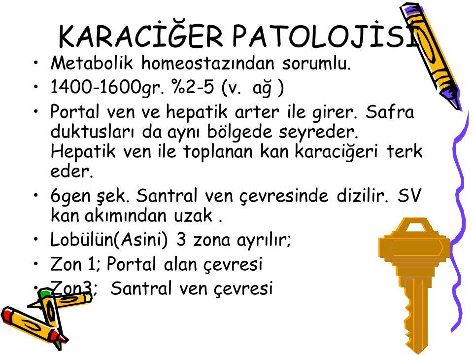 KARACİĞER PATOLOJİSİ Metabolik homeostazından sorumlu.