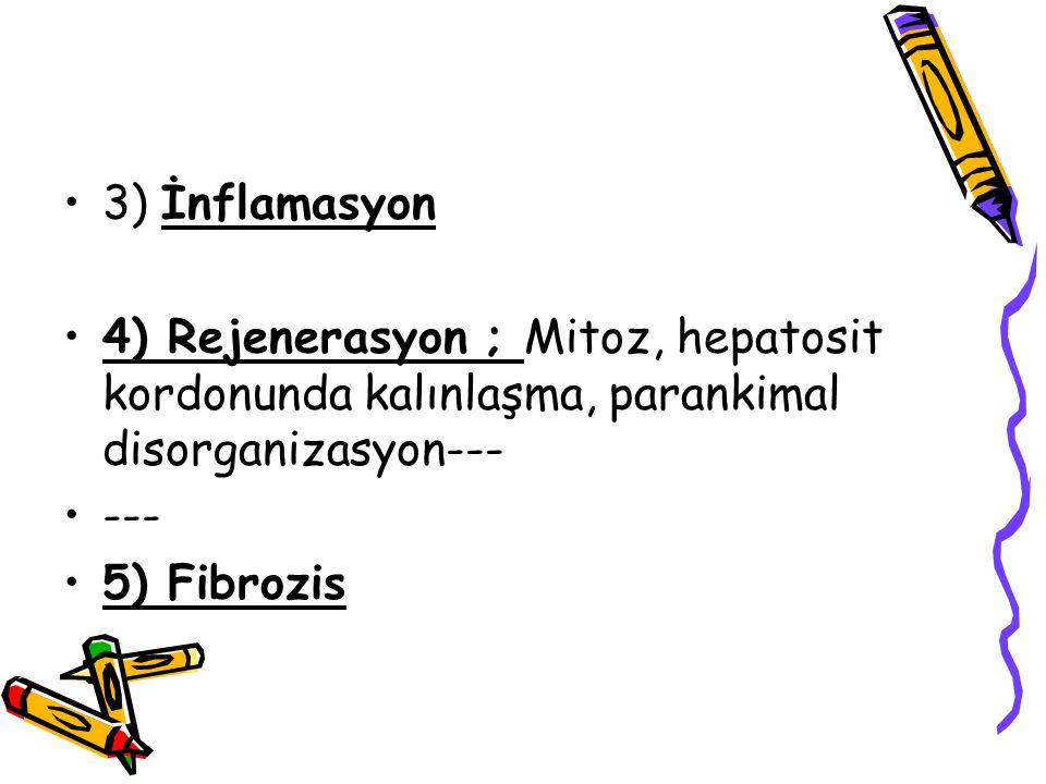 3) İnflamasyon 4) Rejenerasyon ; Mitoz, hepatosit kordonunda kalınlaşma, parankimal disorganizasyon---